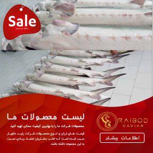 تولید ماهی خاویار پرورشی
