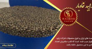تولید خاویار ایران | تولید و صادرات خاویار ایران با برند رایبد خاویار